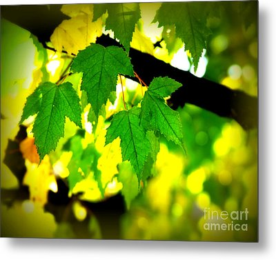 Morning  Light Metal Print by Perry Webster