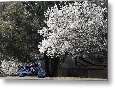 Morning Ride Metal Print by Janet Oh