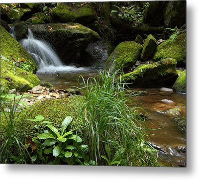 Moss And Water And Ambience Metal Print by Andrew McInnes
