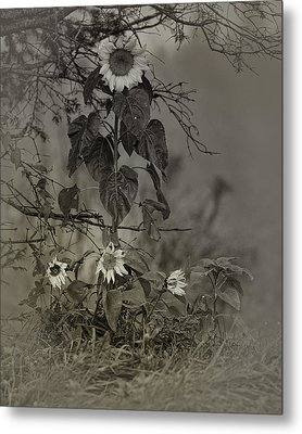 Mother And Child Reunion Metal Print by Susan Capuano