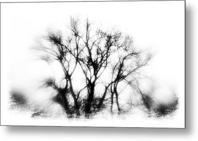 Mysterious Trees Metal Print by David Ridley