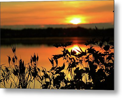 Nature's Paintbrush Metal Print by Mike Stouffer
