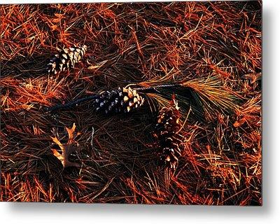 Needles Cones And Oak Leaf Metal Print by Larry Ricker