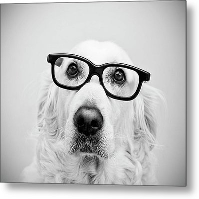 Nerd Dog Metal Print by Thomas Hole