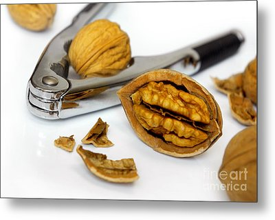 Nut Cracker Metal Print by Carlos Caetano