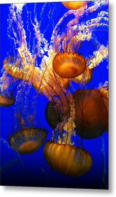 Ocean Jellyfish Metal Print by Anthony Citro