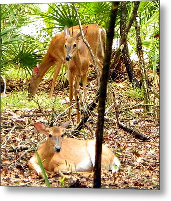 Oh Deer Three Metal Print by Sheri McLeroy