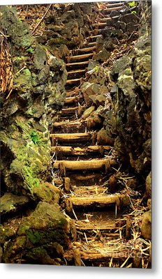 Old Forest Steps Metal Print by Dean Harte