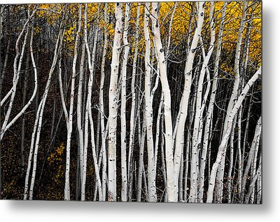 On The Edge Metal Print by The Forests Edge Photography - Diane Sandoval
