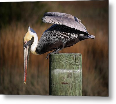 On The Edge Metal Print by Paulette Thomas