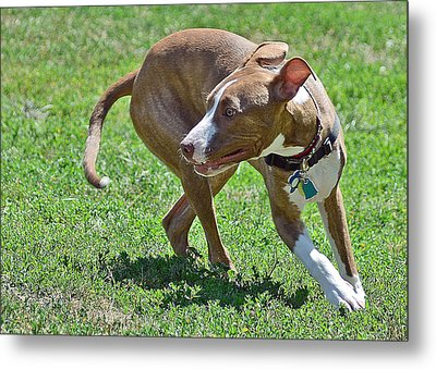 On The Run Metal Print by Lisa Phillips