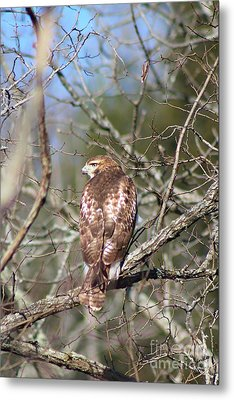 On The Watch Metal Print by Laurinda Bowling