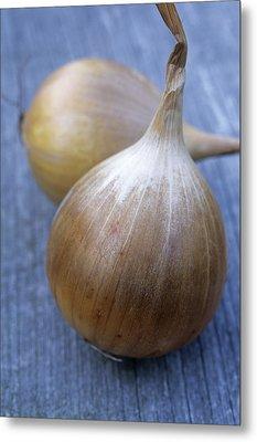Onion (allium Cepa 'ailsa Craig') Metal Print by Maxine Adcock