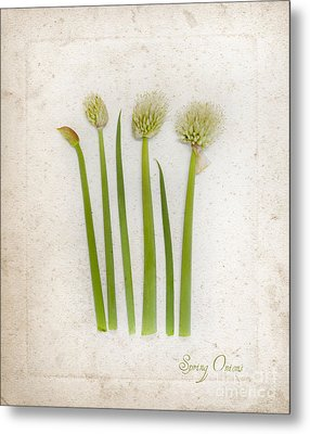 Onion Art Metal Print by Linde Townsend