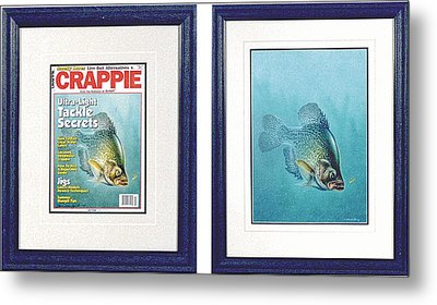 Open Water Crappie Metal Print by JQ Licensing