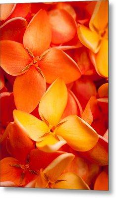 Orange Jungle Flame Flower Metal Print by Johan Larson