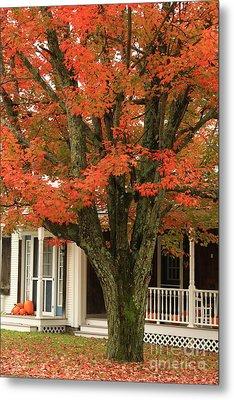 Orange Leaves And Pumpkins Metal Print by Deborah Benoit