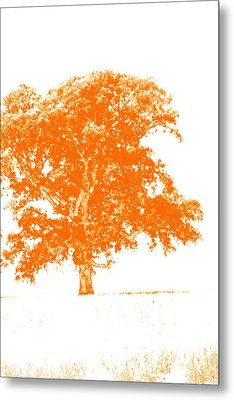Orange Oak Metal Print by Alan Look