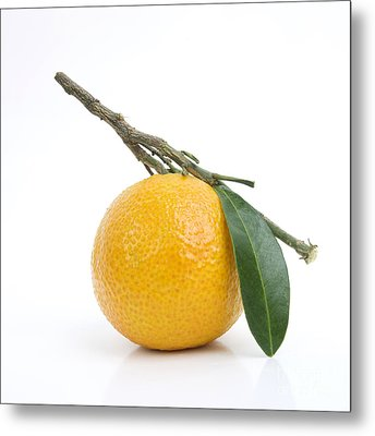 Orange Satsuma Metal Print by Bernard Jaubert