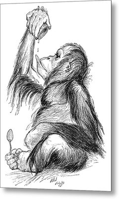 Orangutan, 19th Century Metal Print by