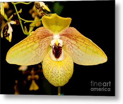 Orchid 23 Metal Print by Terry Elniski
