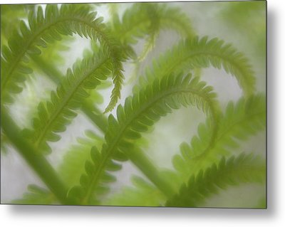 Ostrich Fern Frond Pattern Of Curves Metal Print by Kathleen Clemons