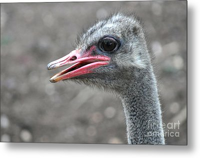 Ostrich Head Metal Print by Joanne Kocwin