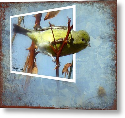 Out Of Bounds Female Goldfinch Metal Print by Cindy Wright