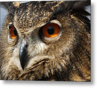 Owl Up Close Metal Print by Paulette Thomas