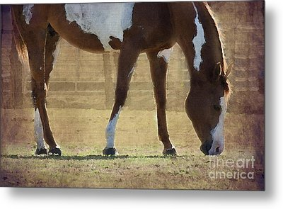 Paint Horse Metal Print by Betty LaRue