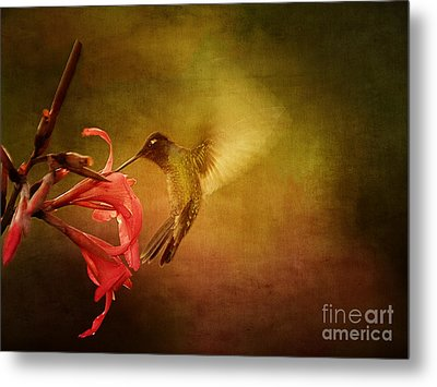 Painterly Hummingbird #2 Metal Print by Anne Rodkin