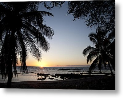 Palm Sunset Metal Print by Peter French