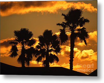Palm Trees In Sunrise Metal Print by Susanne Van Hulst