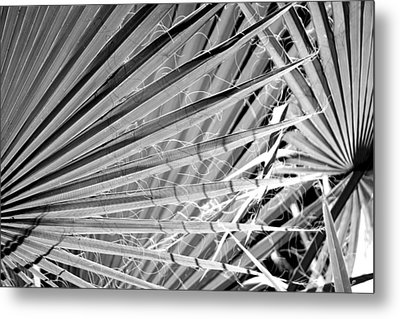 Palm Veils Metal Print by Leigh Meredith