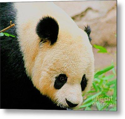 Panda  Metal Print by Cheryl Young