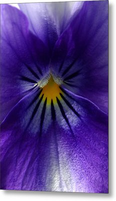 Pansy Abstract Metal Print by Lisa Phillips
