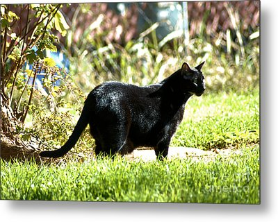 Panther In The Backyard Metal Print by Cheryl Poland