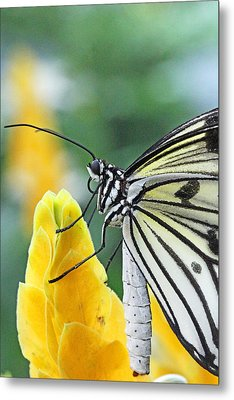 Paper Kite On Yellow Flower Metal Print by Becky Lodes