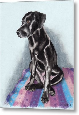 Papi The Labby Metal Print by Sherri Strikwerda