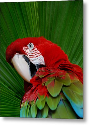 Parrot Head Metal Print by Skip Willits