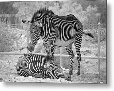 Partners Metal Print by Molly Heng
