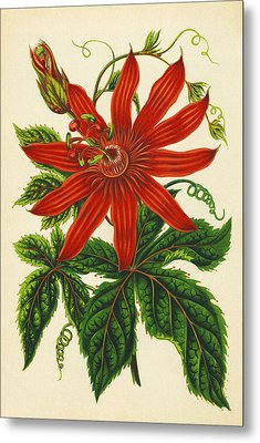 Passion Flower Metal Print by Sheila Terry
