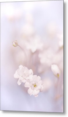 Passion For Flowers. White Pearls Of Gypsophila Metal Print by Jenny Rainbow