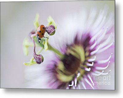 Passion Lady Metal Print by Jacky Parker