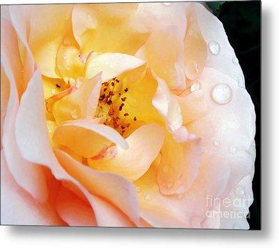 Pastel Rose Metal Print by Kaye Menner