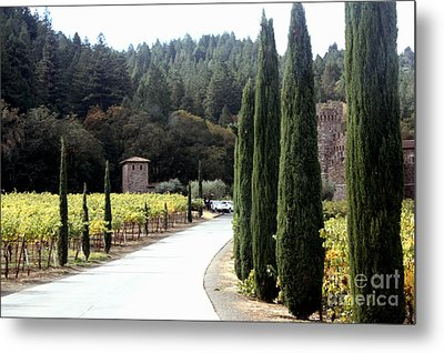 Path To Amerosa Metal Print by Gail Salituri