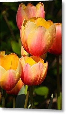 Peachy Tulips Metal Print by Byron Varvarigos