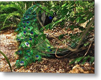Peacock Hiding Metal Print by Kaye Menner