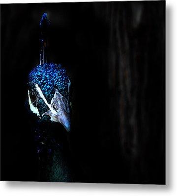 Peacock In The Dark Metal Print by Radoslav Nedelchev