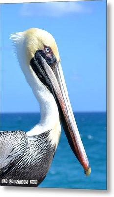 Pelican Metal Print by Fern Korn